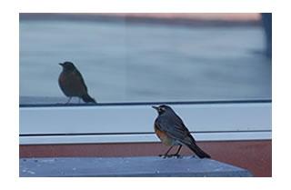 innerblogbirds